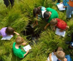 Become a scientist in your own backyard – have a go at 'Citizen Science'